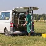 Tierarzt Christian Rübesam Behandlung auf der Weide