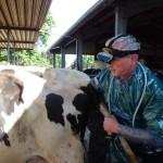 Tierarzt Christian Rübesam Ultraschall beim Rind