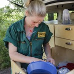 Tierärztin Dr. Anne Brömmling  Vorbereitung einer künstlichen Besamung